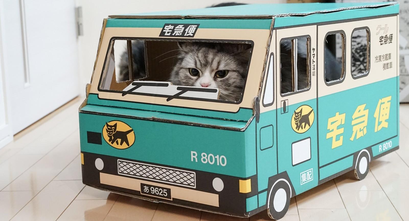 佐川急便のトラックの中に猫が入っている